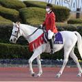 Photos: 誘導馬 エクスペルテ_6(20/12/03・第16回 笠松グランプリ)