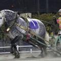 Photos: カネゾウ(19/03/02・第2回 とかちえぞまつ特別)