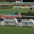 Photos: 中山大障害 誘導馬_2(20/12/26・第143回 中山大障害)