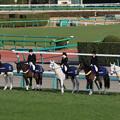 Photos: 中山大障害 誘導馬_3(20/12/26・第143回 中山大障害)