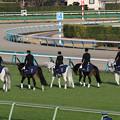 Photos: 中山大障害 誘導馬_4(20/12/26・第143回 中山大障害)
