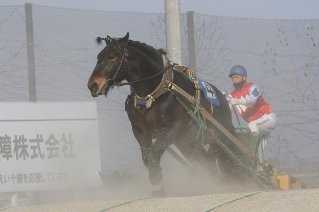 オールラウンダー レース(19/03/03・5R)