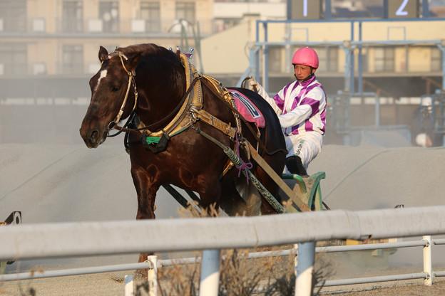 ドルフィン レース(19/03/03・7R)