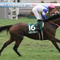 Photos: ショウリュウムーン 返し馬(12/07/22・第60回 トヨタ賞中京記念)