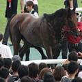Photos: フラガラッハ(12/07/22・第60回 トヨタ賞中京記念)