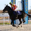 Photos: フーククリスタル 返し馬(20/12/30・第24回 ライデンリーダー記念)