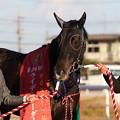 Photos: フーククリスタル(20/12/30・第24回 ライデンリーダー記念)