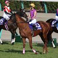 Photos: セガールフォンテン(20/12/26・第143回 中山大障害)