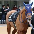 Photos: ウインマリリン パドック_1(20/01/26・若竹賞)