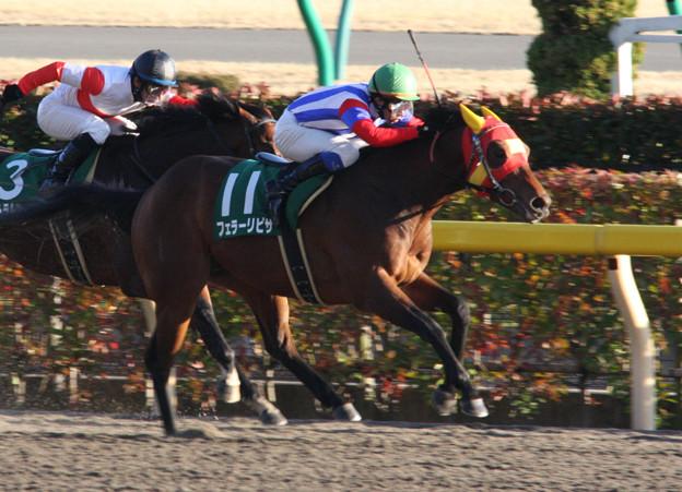 フェラーリピサ レース(09/02/01・第23回 根岸ステークス)