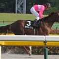 サクラレグナム 返し馬(14/05/18・BSイレブン賞)