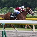 スペルマロン レース(17/08/26・瀬波温泉特別)