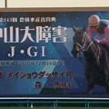Photos: メイショウダッサイ_5(20/12/26・第143回 中山大障害)