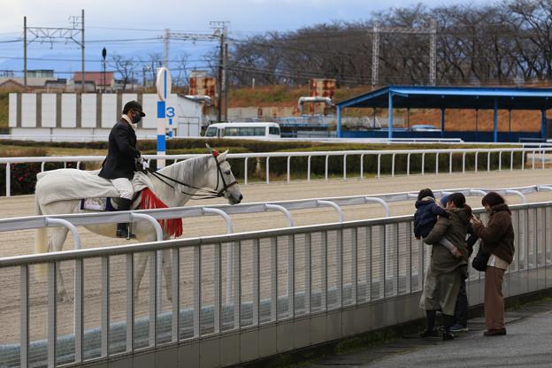 Photos: 誘導馬 エクスペルテ_1(20/12/30)