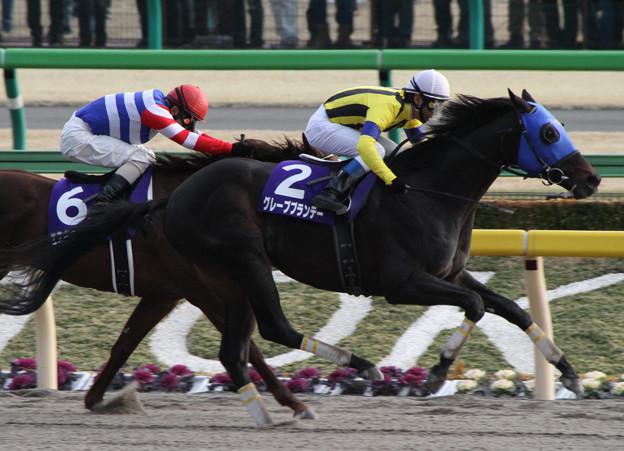グレープブランデー レース(13/02/17・第30回 フェブラリーステークス)