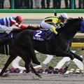 Photos: グレープブランデー レース(13/02/17・第30回 フェブラリーステークス)