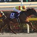 Photos: コパノリッキー レース(14/02/23・第31回 フェブラリーステークス)