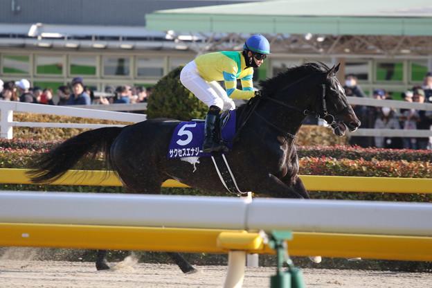 サクセスエナジー 返し馬(19/02/17・第36回 フェブラリーステークス)