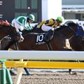 Photos: イーグルフェザー レース(18/01/27・銀蹄ステークス)