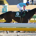ヤマニンアンプリメ 返し馬(19/01/27・第33回 根岸ステークス)
