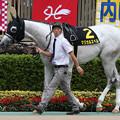 Photos: マジカルスペル パドック(19/10/06・グリーンチャンネルカップ)