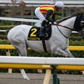 マジカルスペル 返し馬(19/10/06・グリーンチャンネルカップ)