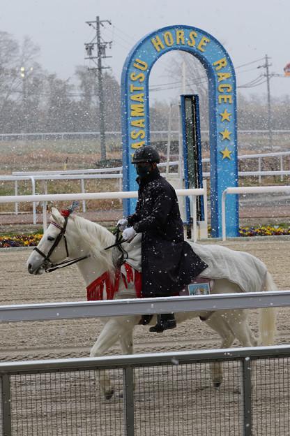 Photos: 誘導馬 ウイニー_5(20/12/31)