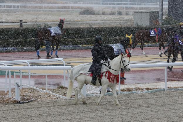 Photos: 誘導馬 ウイニー_6(20/12/31)