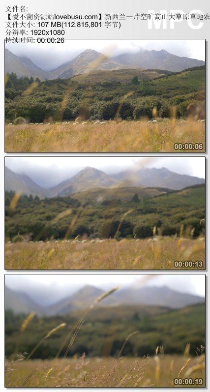 新西兰一片空旷高山大草原草地农场放牧动物走动镜头高清视频实拍