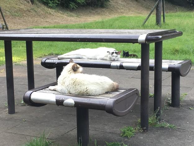 猫 花島公園