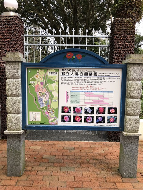 東京都立大島公園 椿園