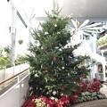 クリスマスツリー 三陽メディアフラワーミュージアム