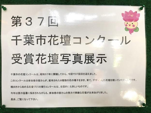 ちはなちゃん 第37回 千葉市花壇コンクール 三陽メディアフラワーミュージアム