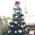 写真: クリスマスツリー 三陽メディアフラワーミュージアム