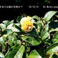 Photos: 201210-2