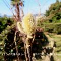 Photos: 201210-4