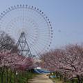 s2675_天保山公園の桜