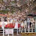 Photos: s3024_樽見駅とハイモ295-617