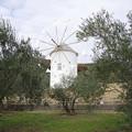 Photos: s6933_道の駅小豆島オリーブ公園_ギリシャ風車