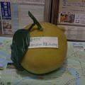 s7403_晩白柚模型_八代観光案内所