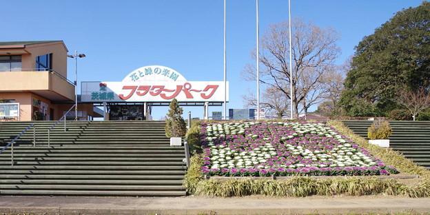 s6297_茨城県フラワーパーク_t