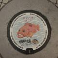 Photos: s8055_明石市マンホール_市制100周年_キジハタ