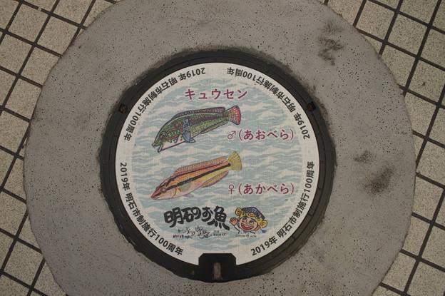 Photos: s8056_明石市マンホール_市制100周年_キュウセン