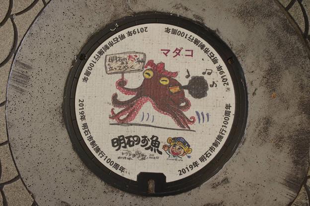 Photos: s8057_明石市マンホール_市制100周年_マダコ