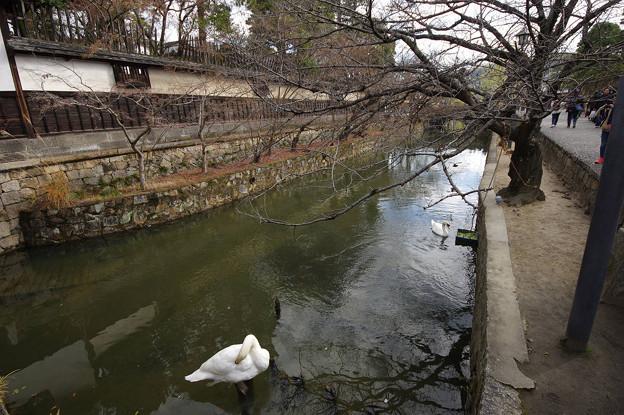 s3530_倉敷美観地区_倉敷川の白鳥