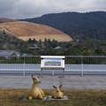 Photos: s3278_奈良県庁屋上から東側と鹿のモニュメント