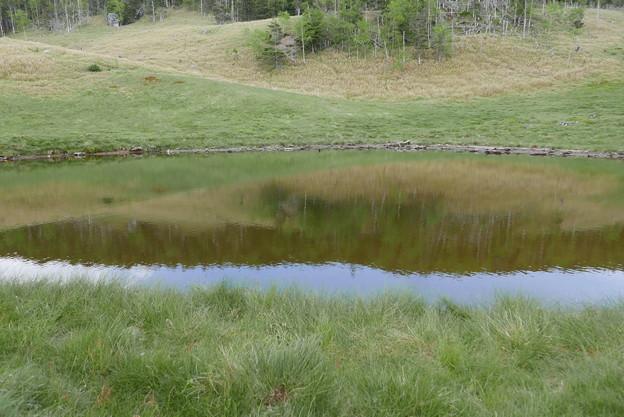 池には映り込みも。