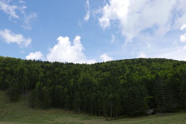 木々は奇麗・空は青い。