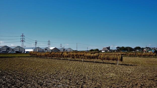 残したい日本の秋景色・はざかけ。