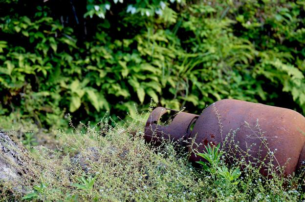 夏草に横たわり